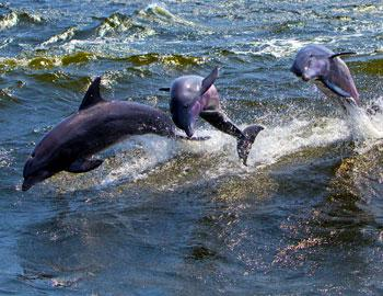 Dolphin Watching Tours Key West Florida